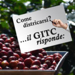 Base GITC risponde 07