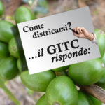 Base GITC risponde 20